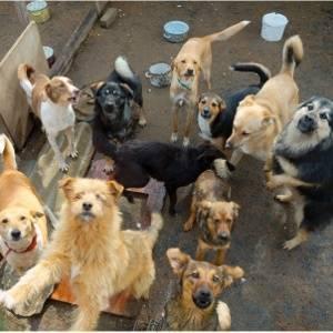 Perros de perrera o protectora