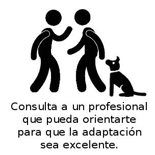 Perro_en-casa_web_adiestrador