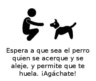 Perro_en-casa_web_agachado