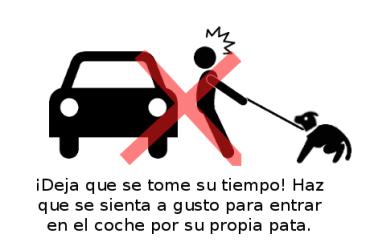 Perro_en-casa_web_coche