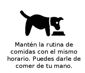 Perro_en-casa_web_comer
