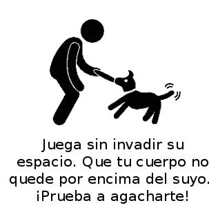 Perro_en-casa_web_jugar
