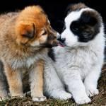 socializacion_cachorro