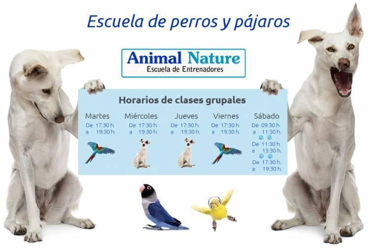Horarios_perros y pájaros