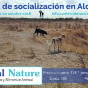 Salida de socialización canina - octubre