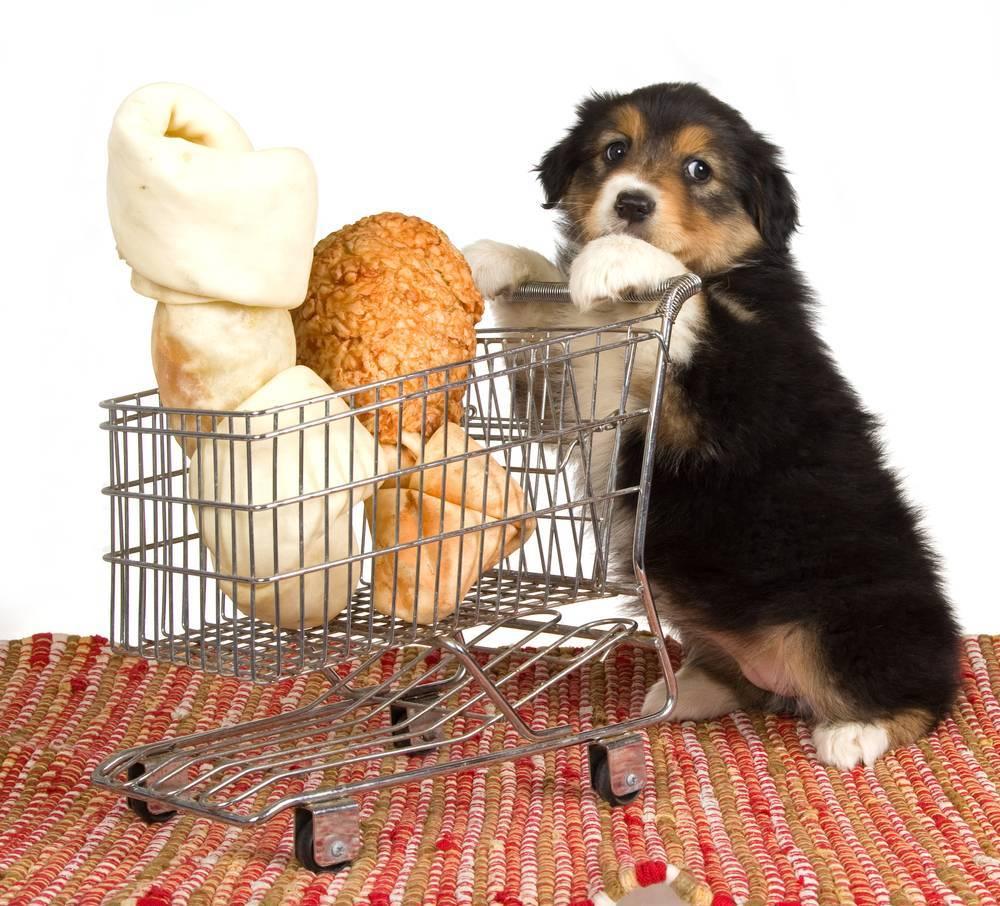 ¡Mi perro es un ladrón de comida!