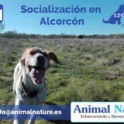 Salida de socialización canina