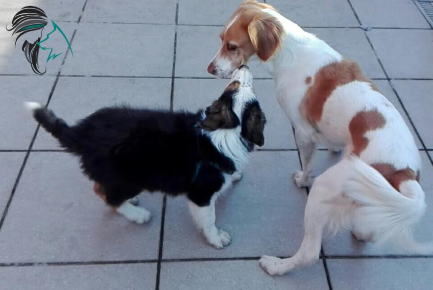Perro adulto jugando con cachorro