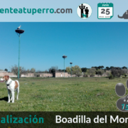 2017-06-25_BoadilladelMonte salida de socializacion canina