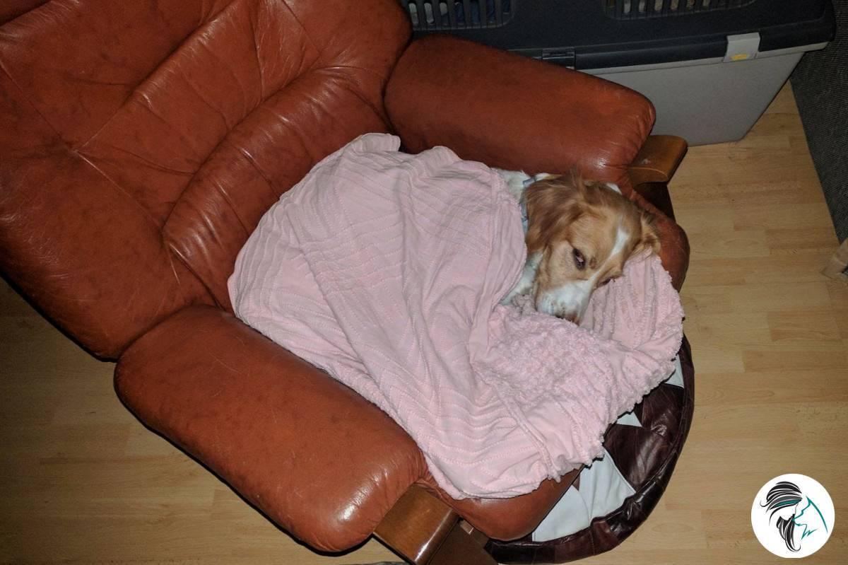 ¿Todo en orden cuando tu perro se queda solo en casa?