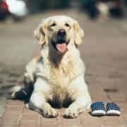 Perro esperando con zapatillas