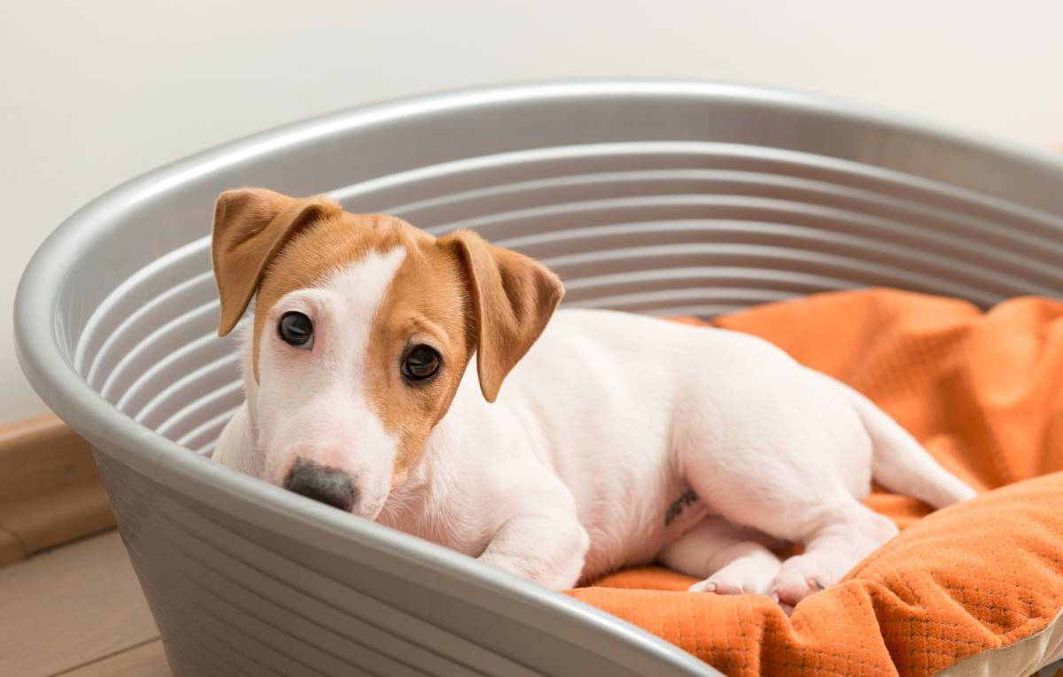 Sobreprotección y miedos en los perros
