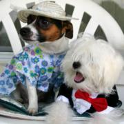 Perros vestidos con traje y esmoquin