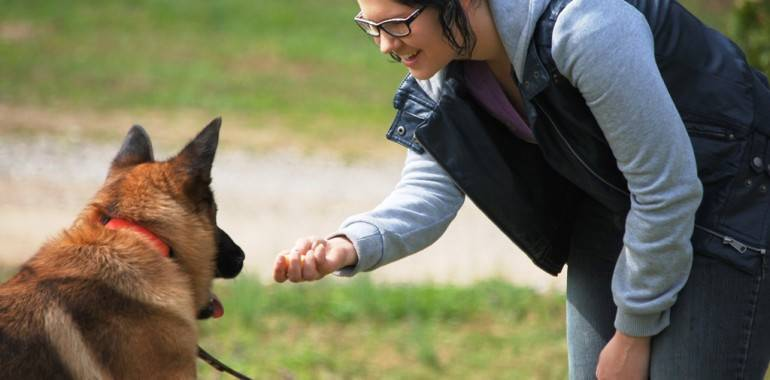 7 requisitos para escoger un buen curso de adiestrador/a canino/a