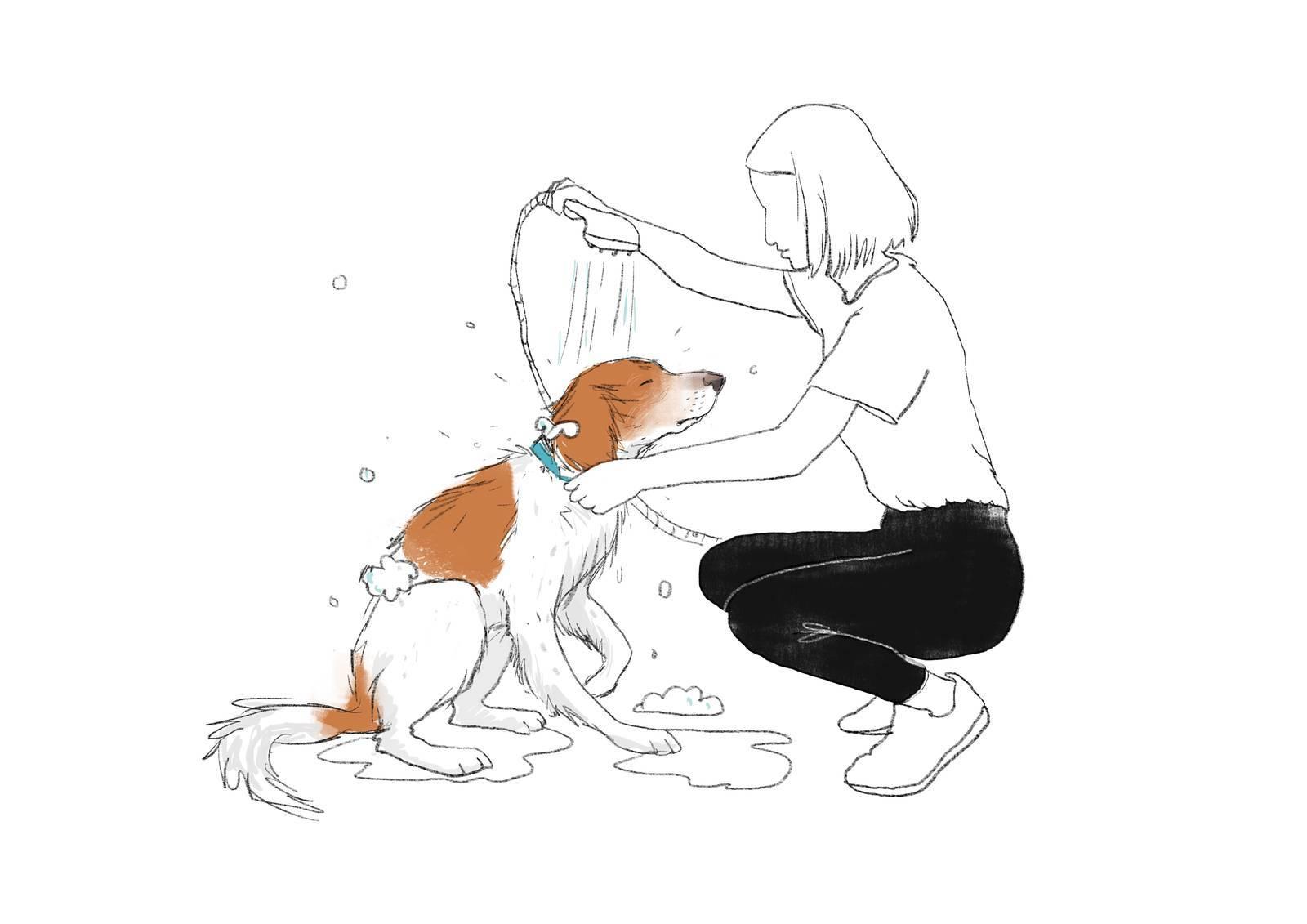 No duches al perro