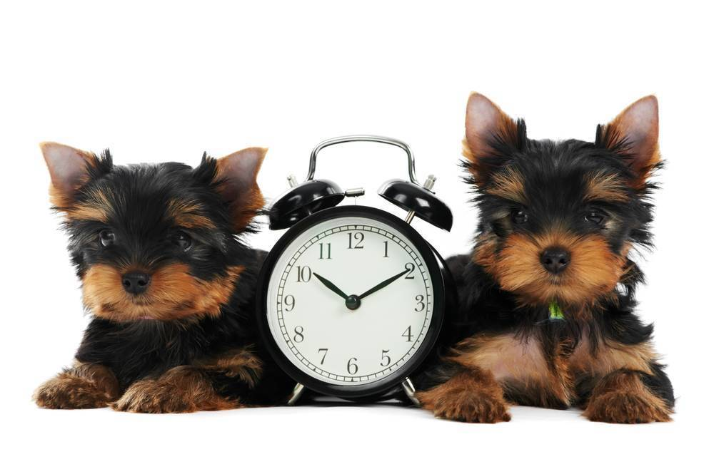 Las claves del éxito (I): Tiempo