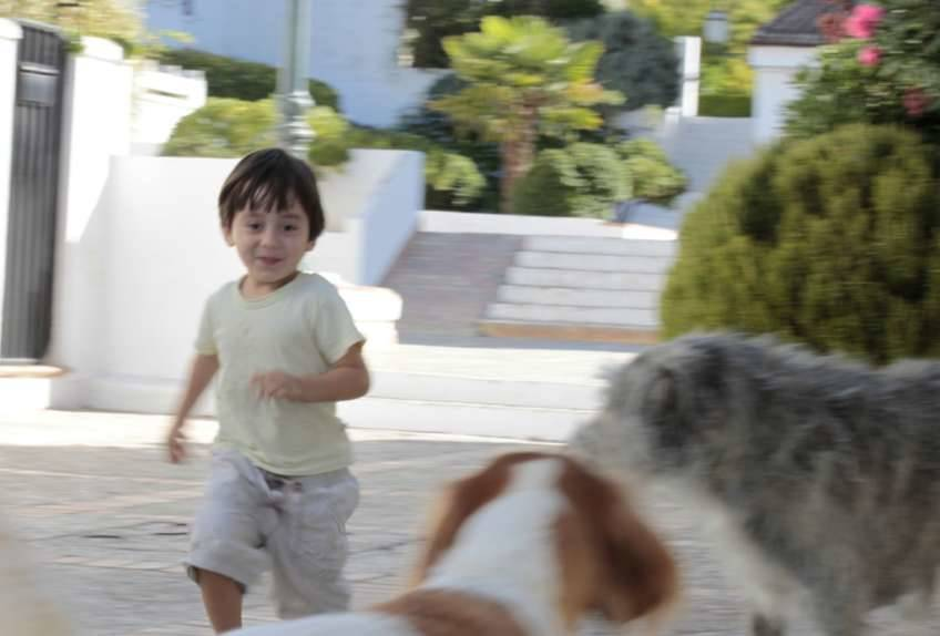 Niño jugando con perros