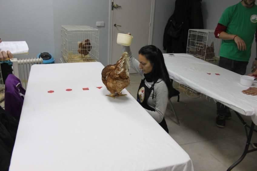 Chicken Camp - nivel I