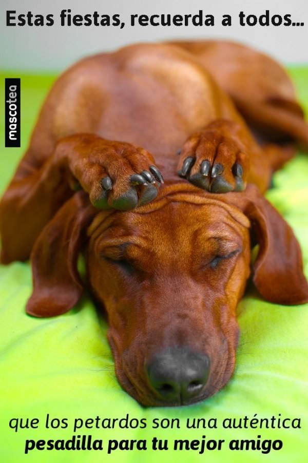 Perros y petardos