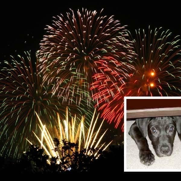 Perros en fiestas con fuegos artificiales