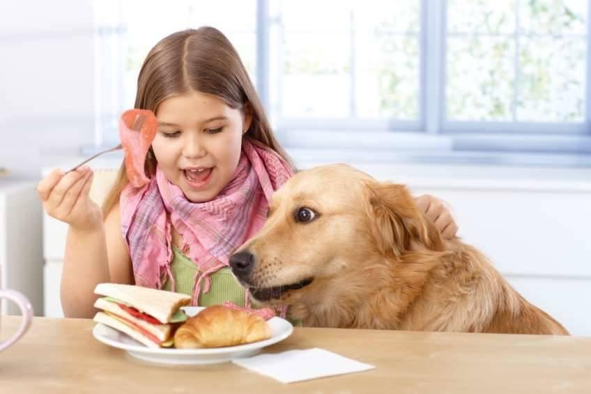 Perro comiéndose la comida de una niña