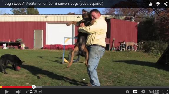 Amor difícil, una meditación sobre la dominancia y los perros