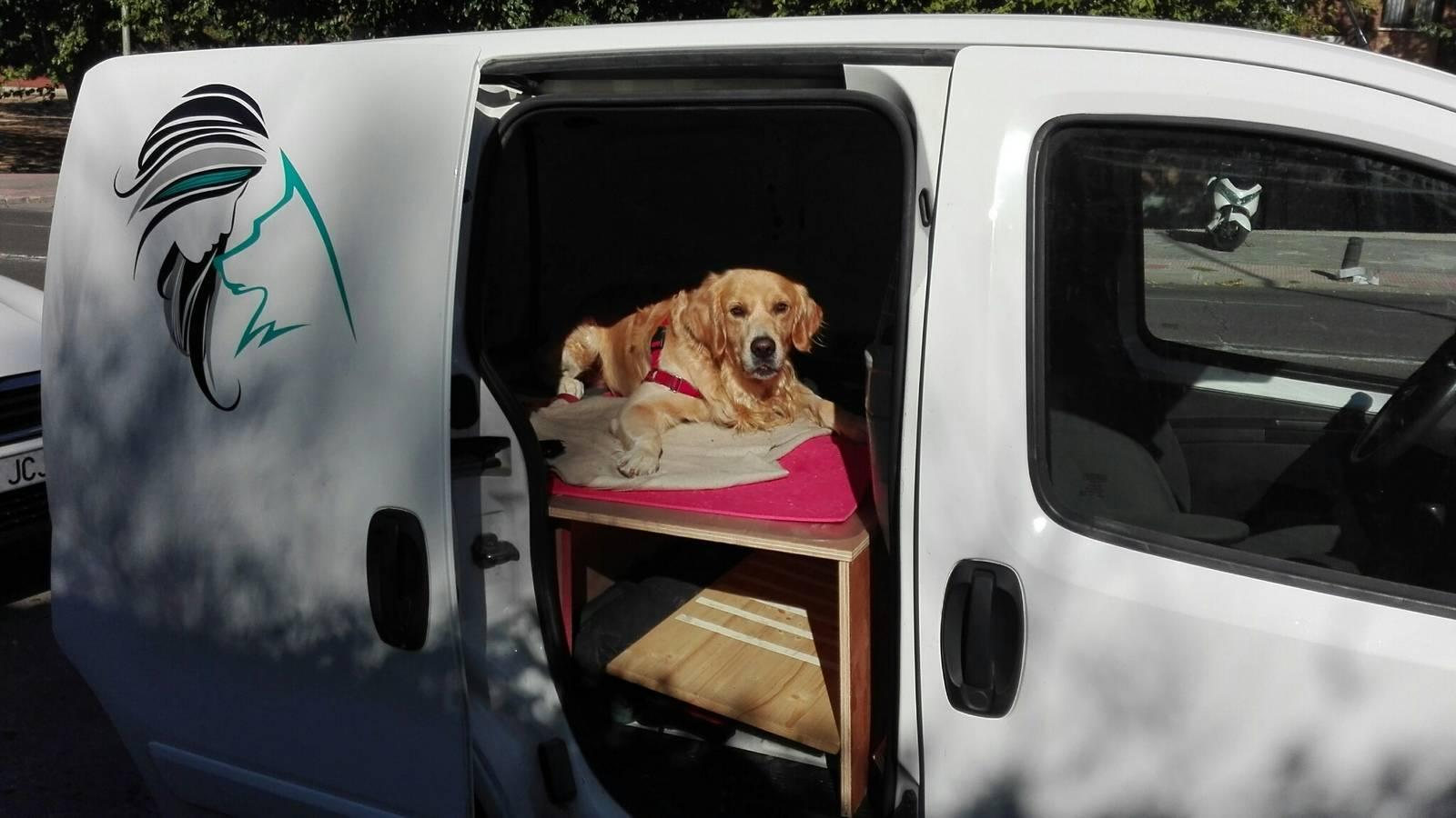 Entrenando con Mason, perro de terapias asistidas con animales
