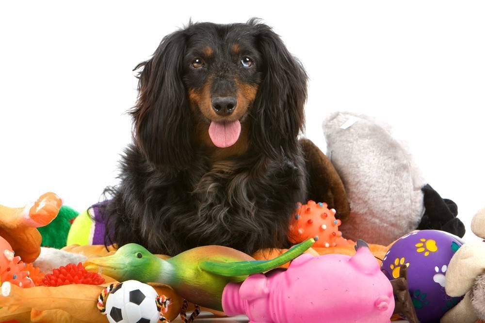 El adiestramiento canino, ¡es sólo un juego!
