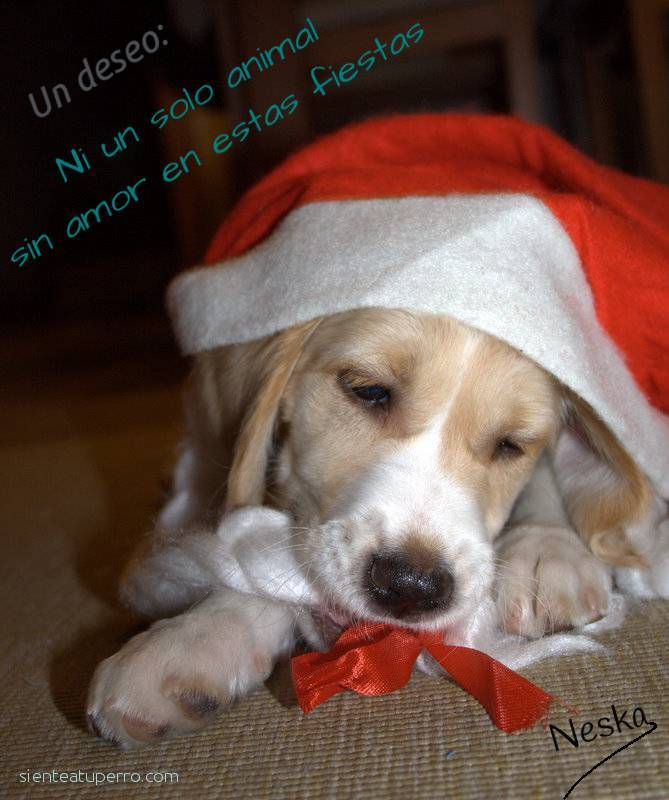 Felices fiestas animales