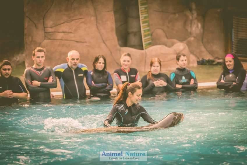 Seminario de leones marinos en Río Safari