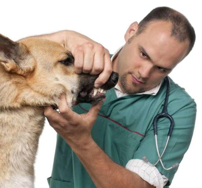 Manejo en el veterinario