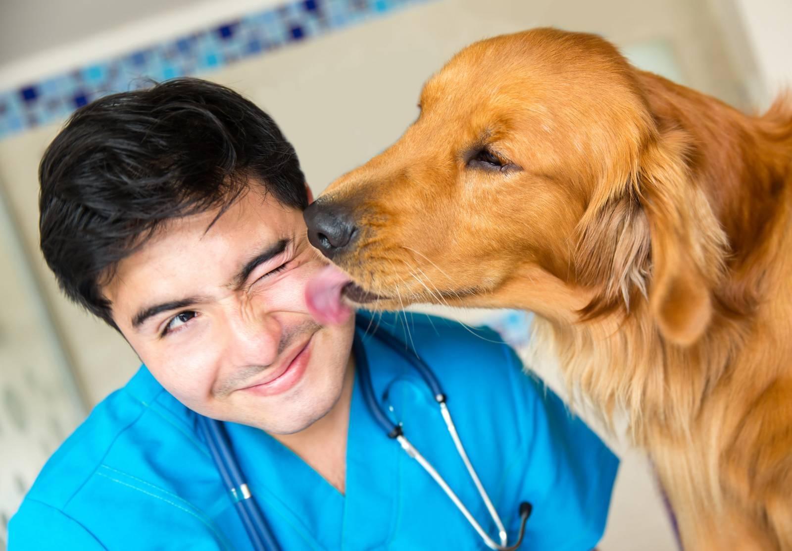 Perros contentos en el veterinario