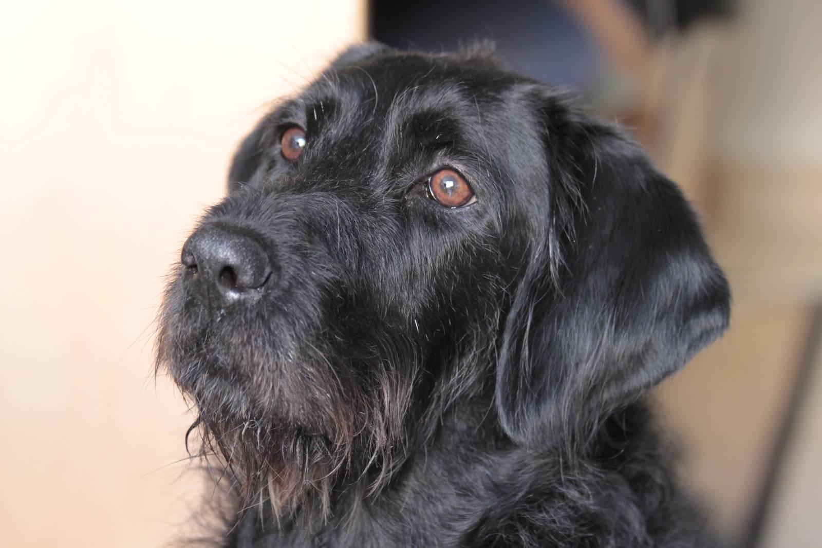Sasha, una gran perra de terapia
