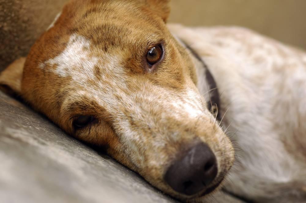 Perros inseguros: mejor con calma