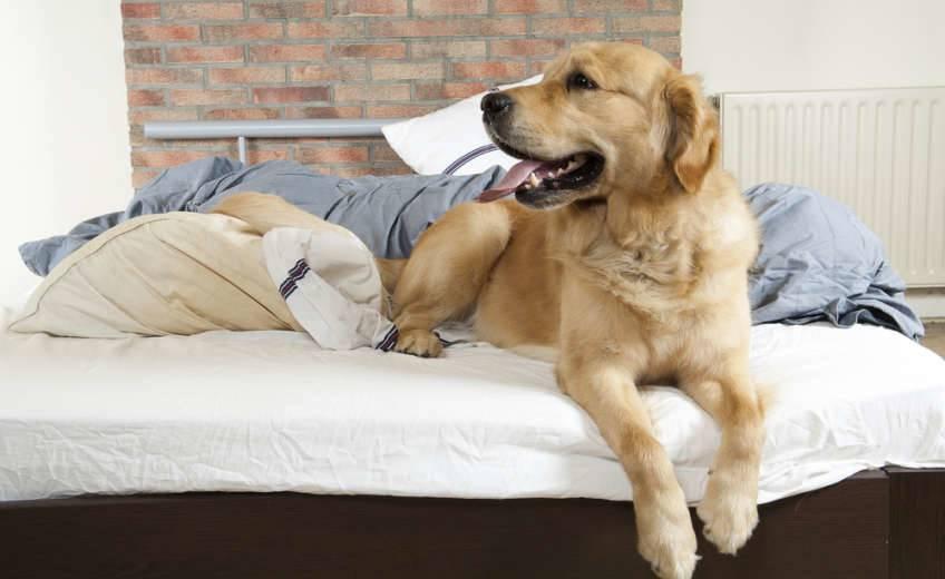 Perro tumbado en una cama