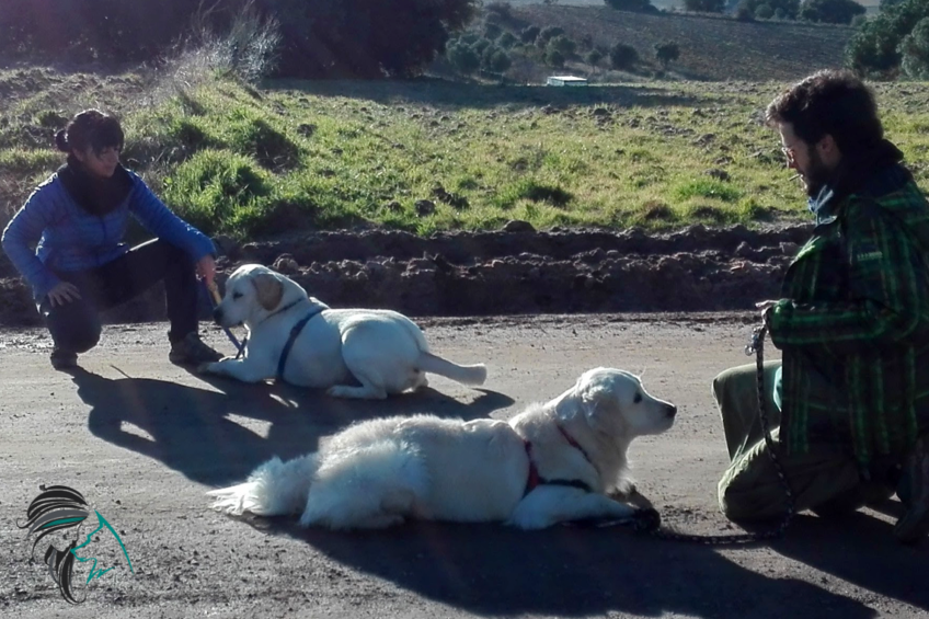 salidas de socialización canina