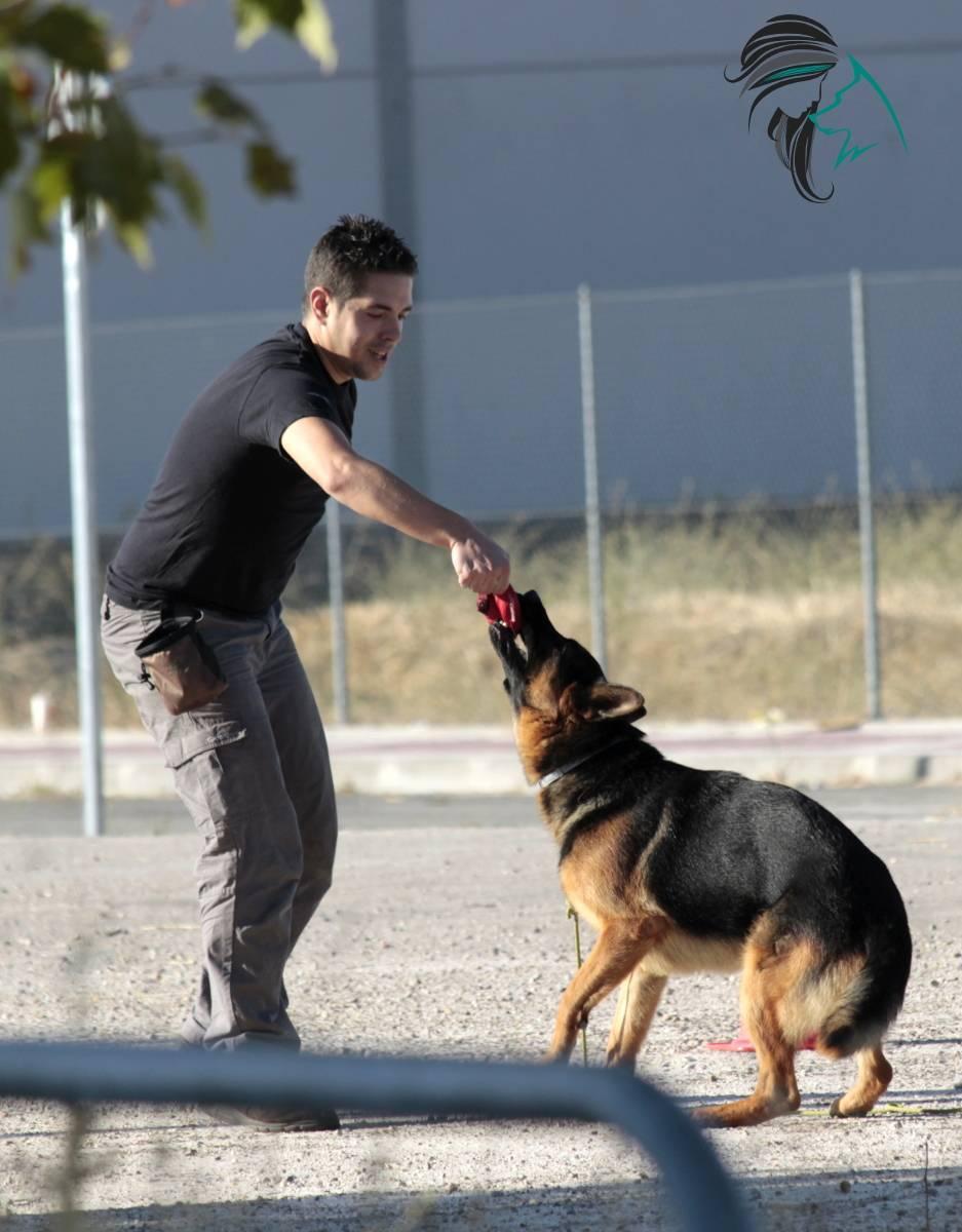 Aprende a jugar con tu perro
