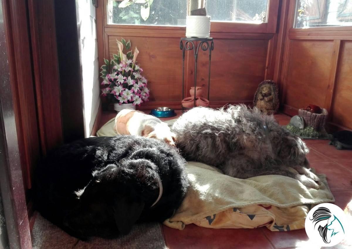Tres perras durmiendo en el porche de la casa