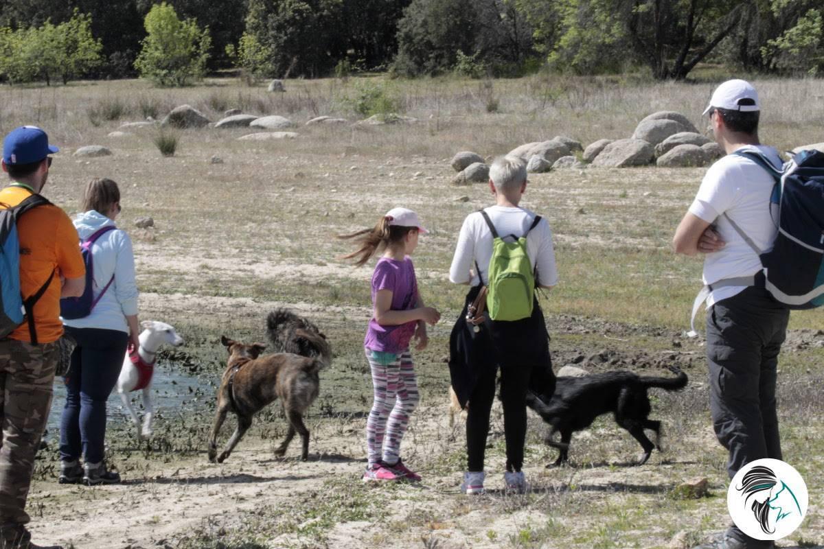 El secreto de las salidas de socialización canina