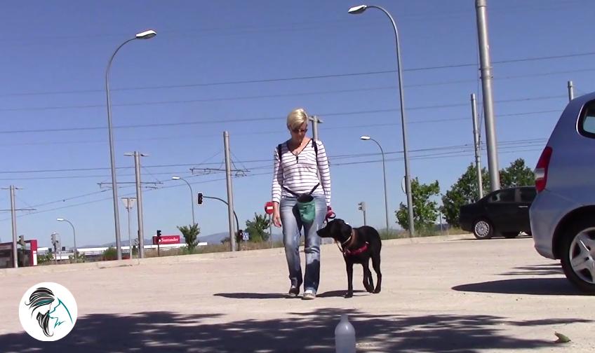 Entrenamiento en clases grupales caninas