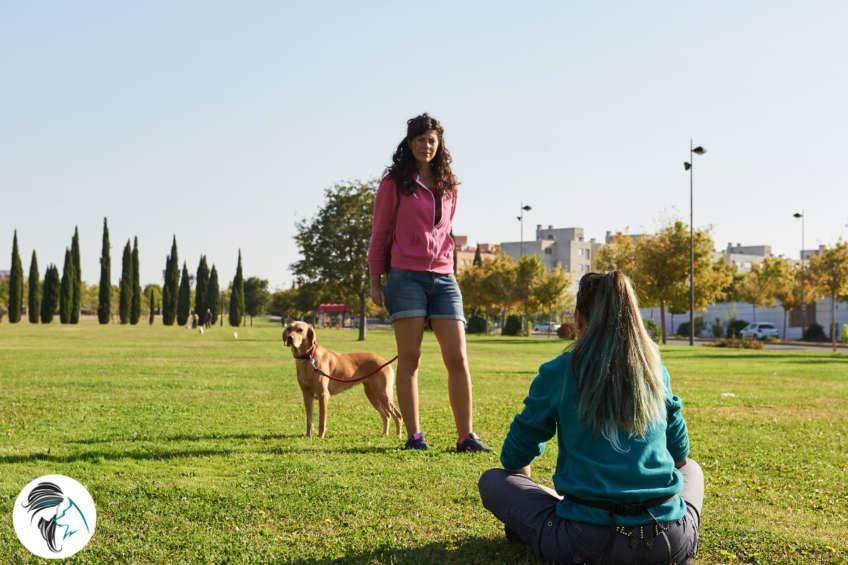 Taller de la llamada a perros