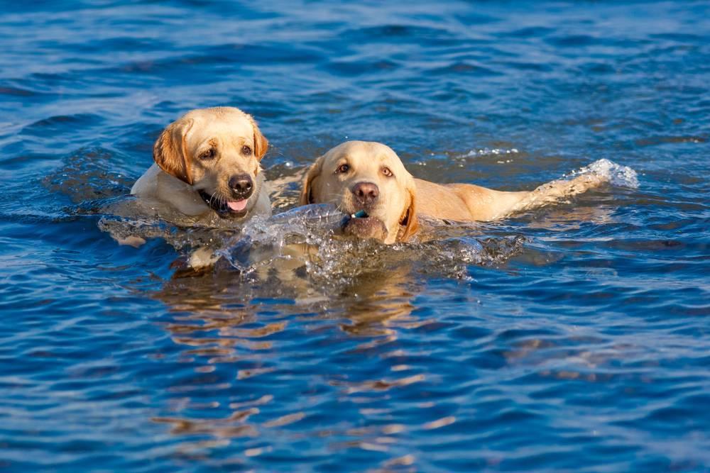 Perros jugando con perros