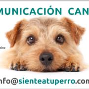 Comunicacion canina charla