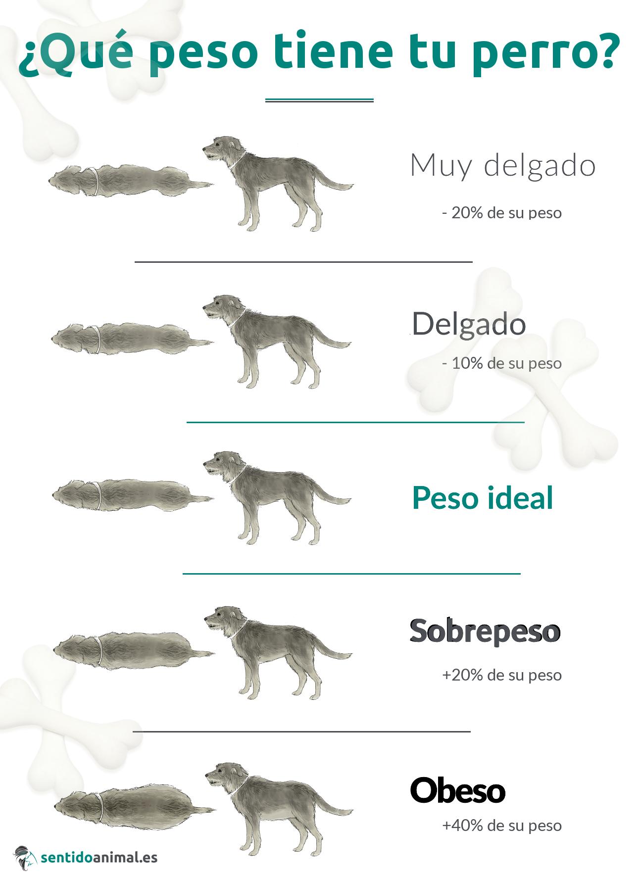 Pesos ideal de los perros