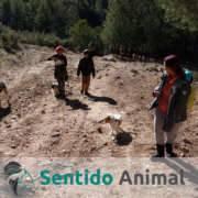 Senderismo con perros - dic17