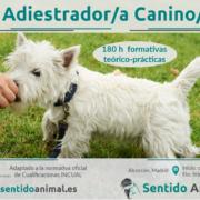Curso profesional Técnicas de Adiestramiento de base aplicado a perros 2018-19