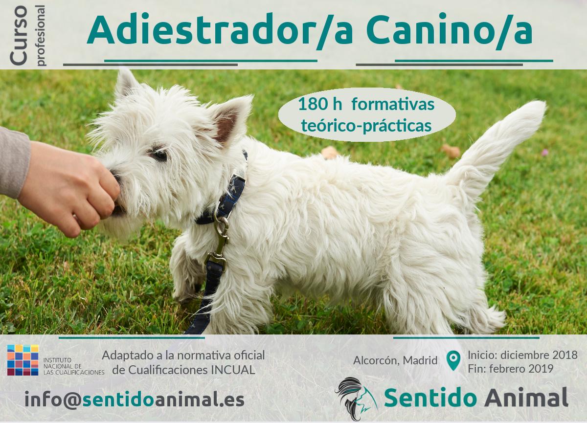 Curso profesional de Técnicas de adiestramiento de base en perros