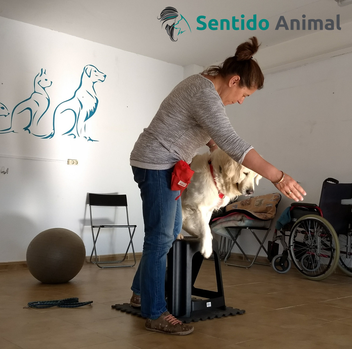 4 beneficios de jugar con tu perro