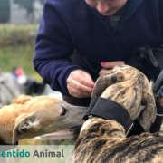 Intervenciones asistidas con animales en la protectora Amores Peludos