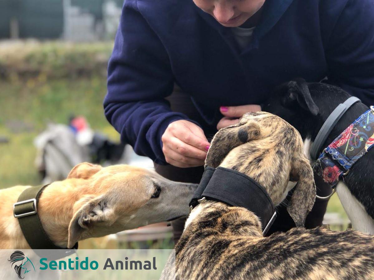 Actividades asistidas con perros en la protectora Amores Peludos